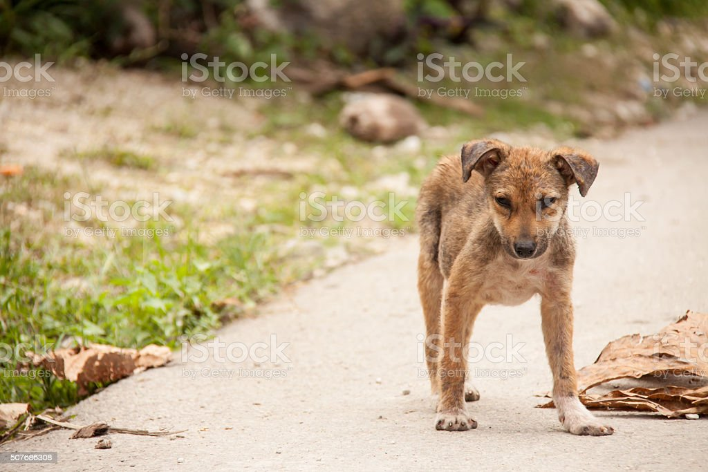 Sad mangy puppy stock photo