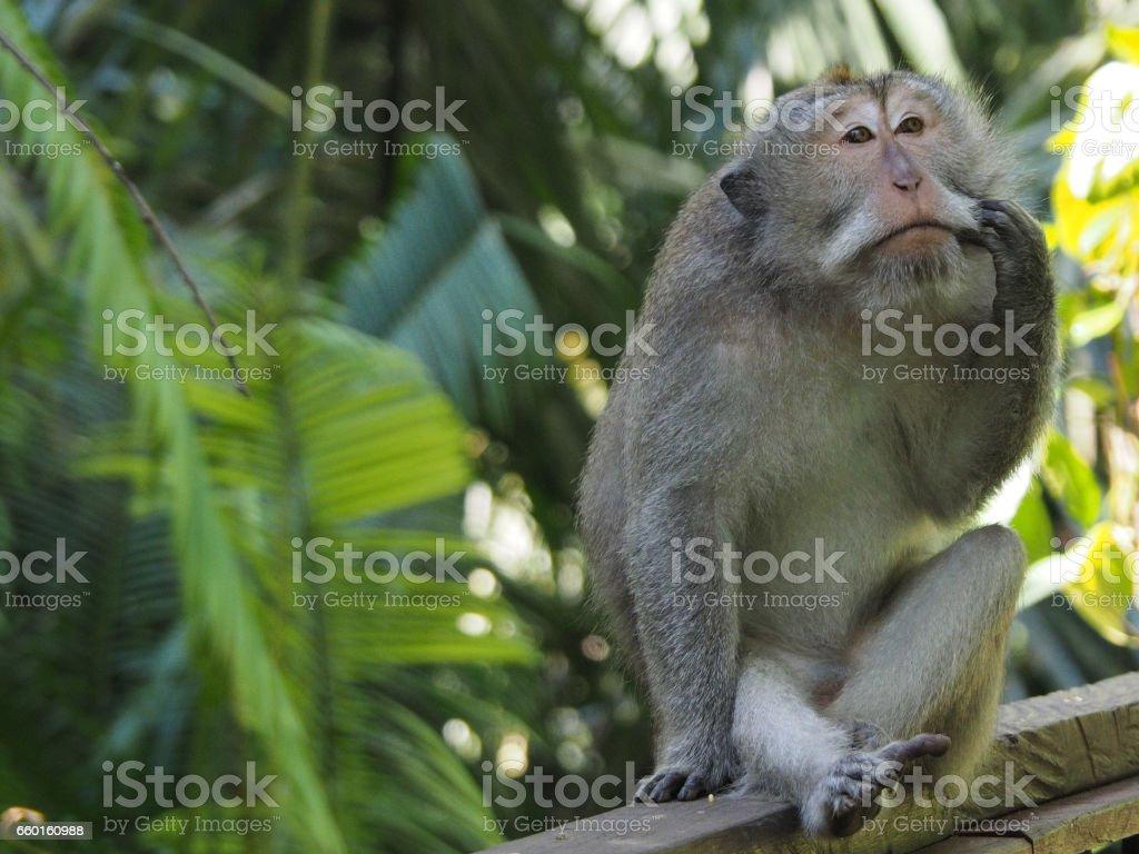 Sad Monkey stock photo