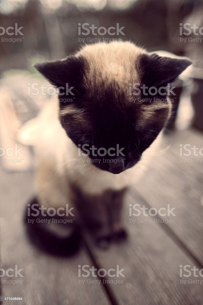 Sad mournful cat looks down royalty-free stock photo
