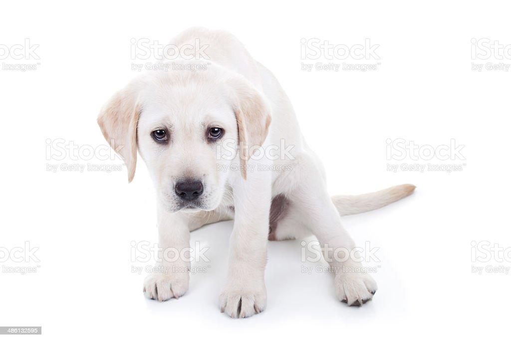 Sad or Bad Dog stock photo
