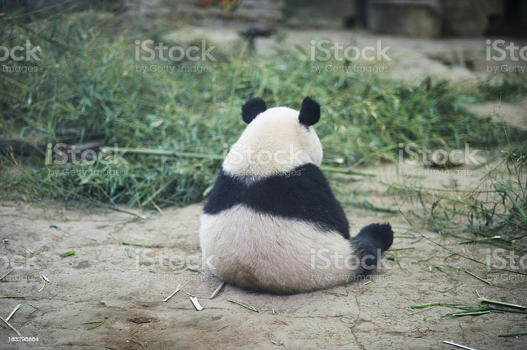 Sad Panda stock photo