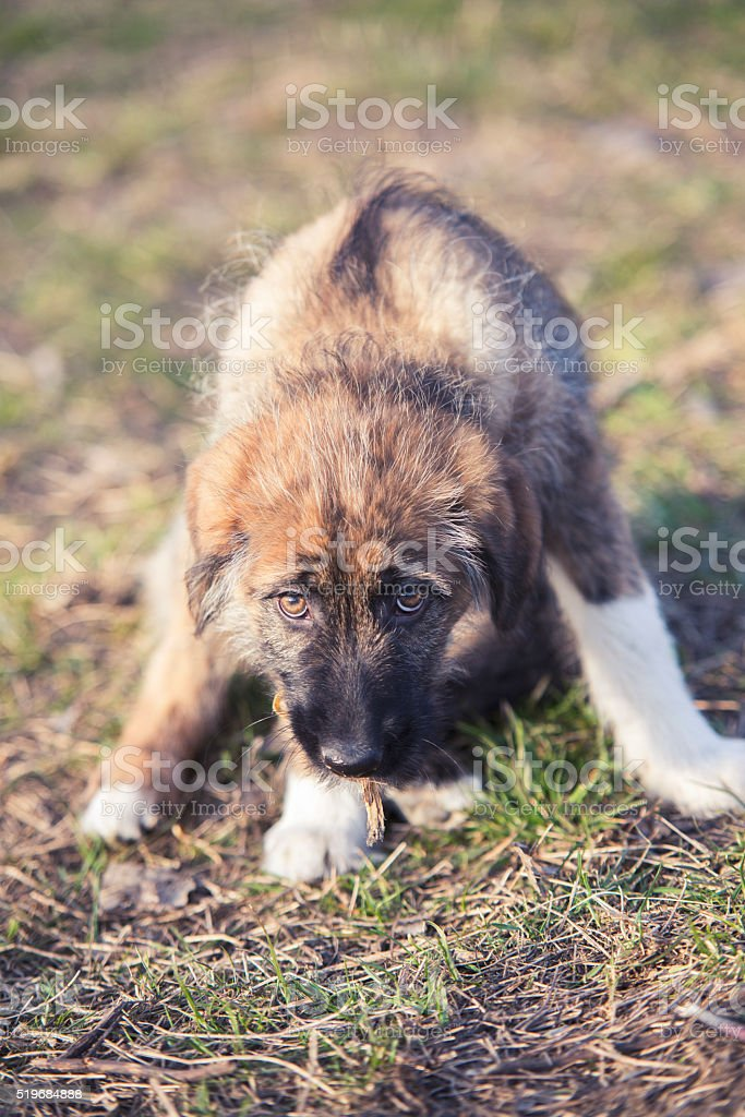 sad portrait of young dog on grass stock photo