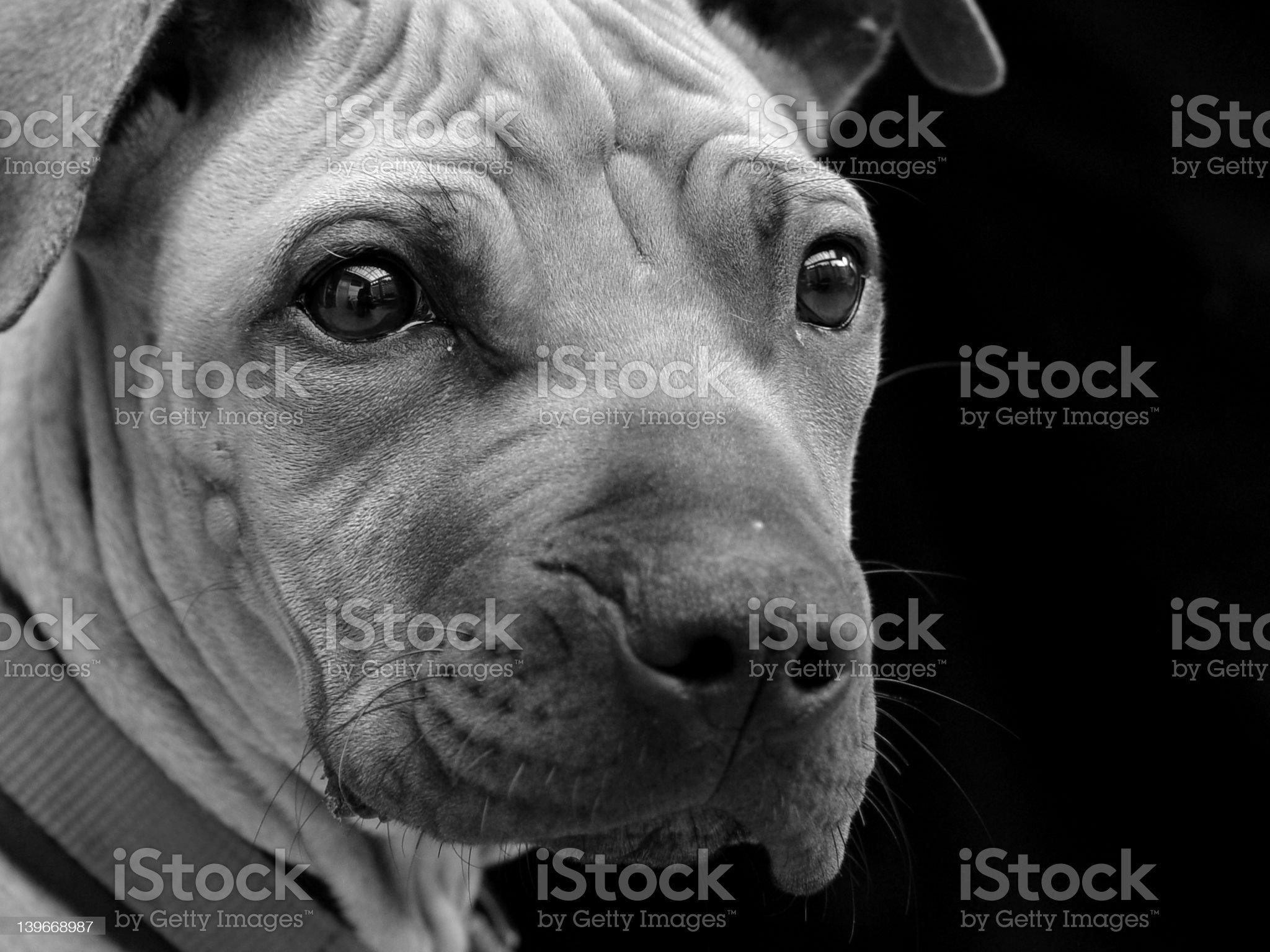 Sad pup royalty-free stock photo