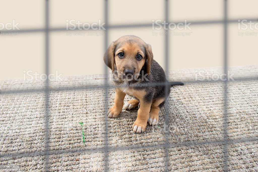 sad puppy in a kennel stock photo