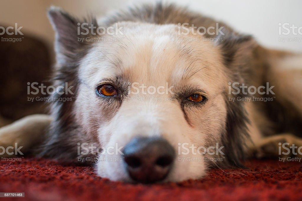 Triste Sammy photo libre de droits