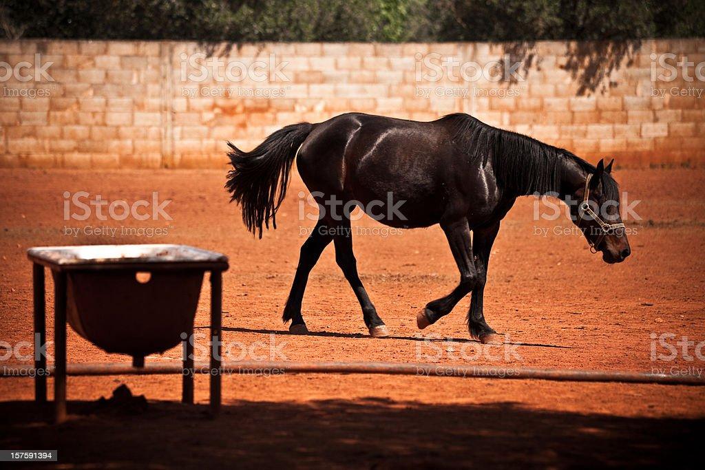 Sad Scruffy Horse stock photo
