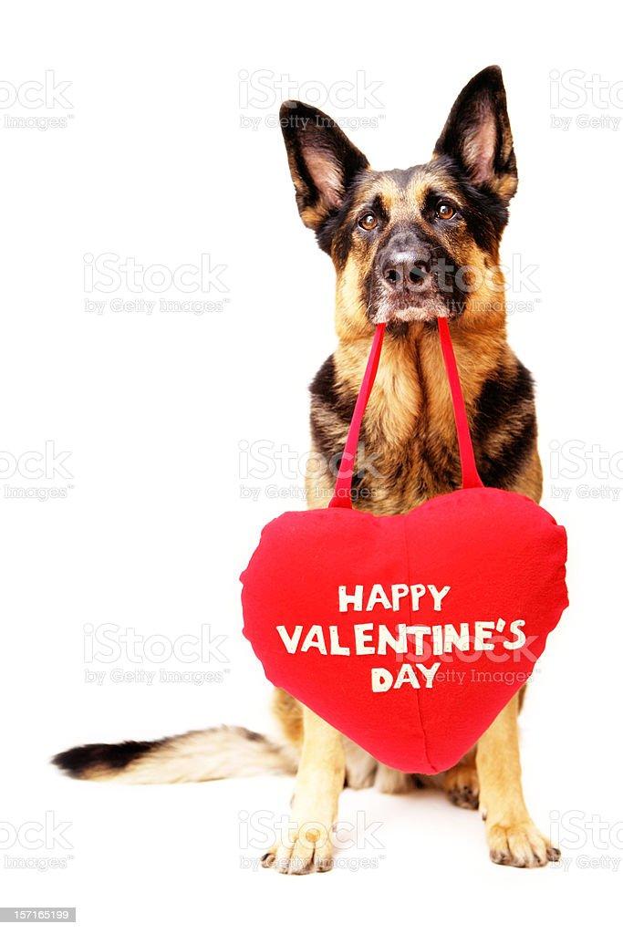 Sad Valentine's Day Dog royalty-free stock photo