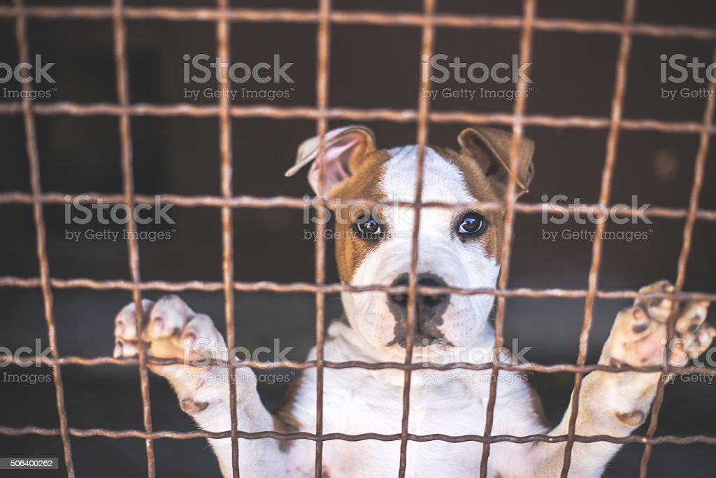 Sad Young puppy in shelter waiting for new owner stock photo
