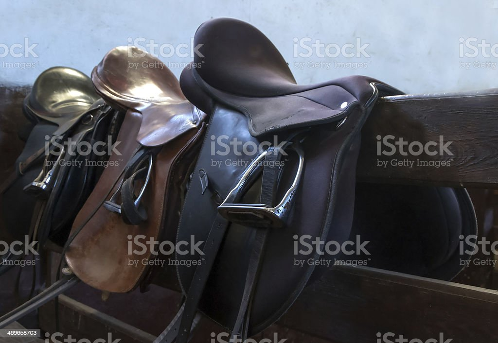 saddle horse stock photo