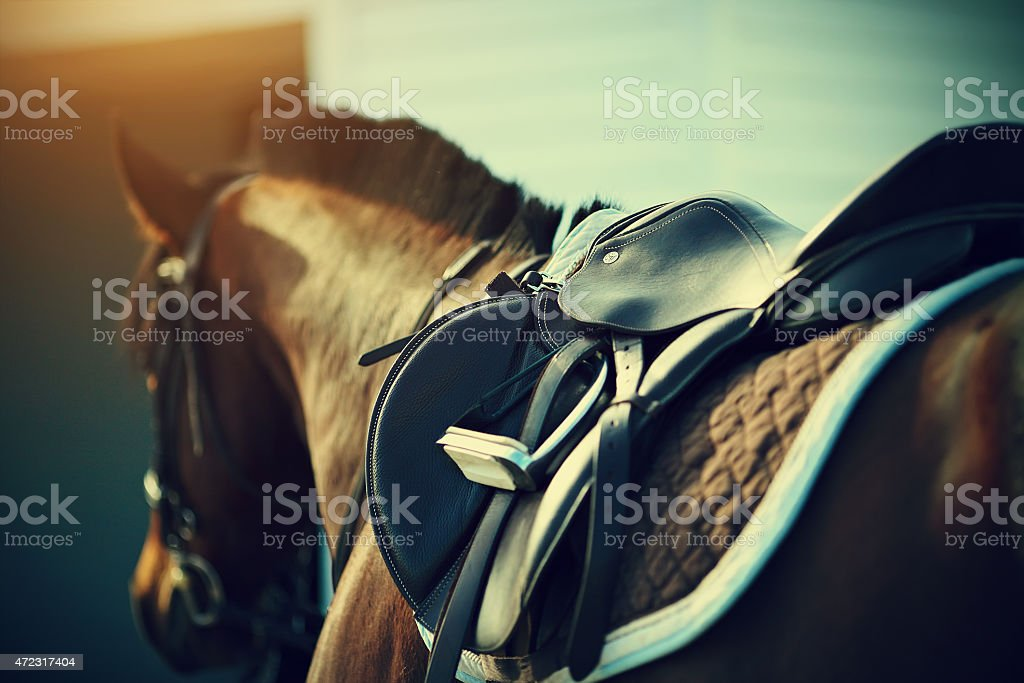 Saddle on the back of a brown horse stock photo