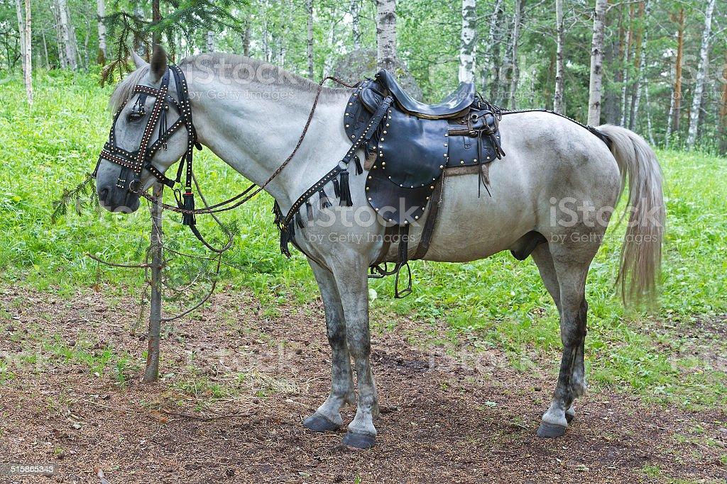 Saddled horse stock photo