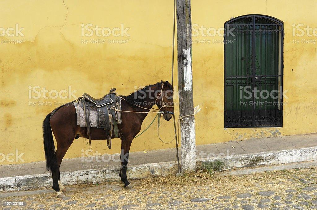 Saddled Horse Tied to Pole stock photo