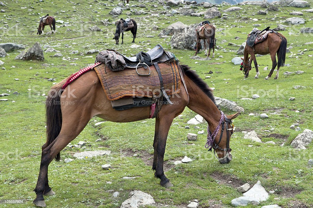 Saddled Horses in Indian Mountains royalty-free stock photo