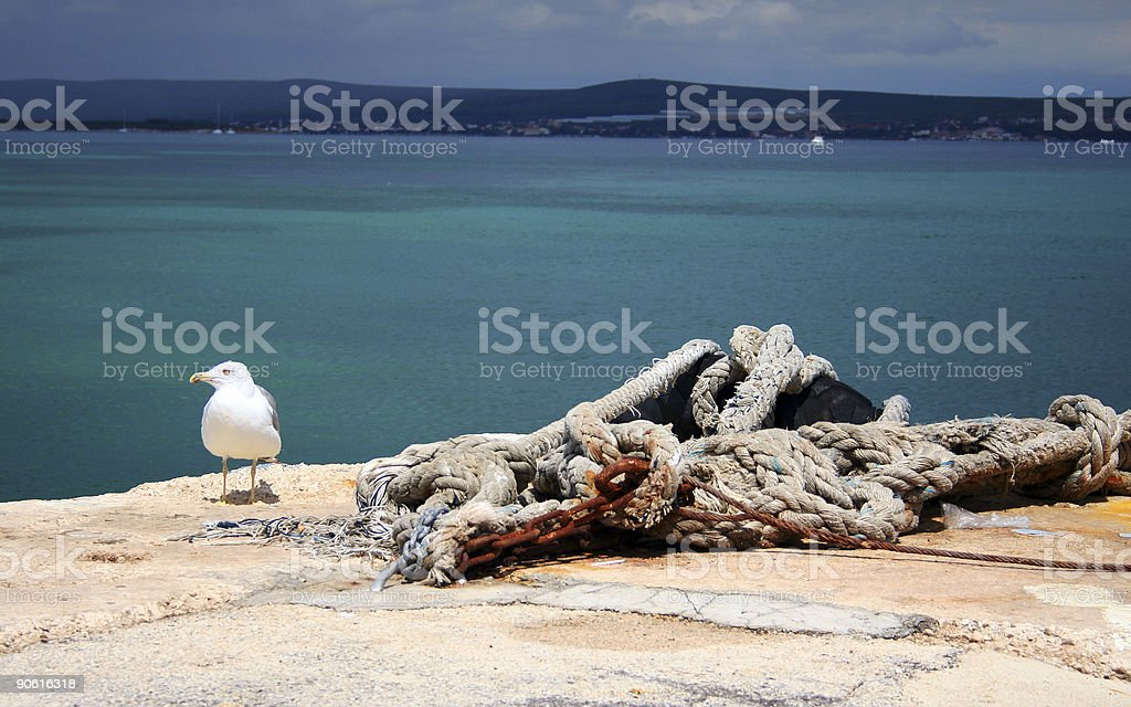 Saegull and rope royalty-free stock photo