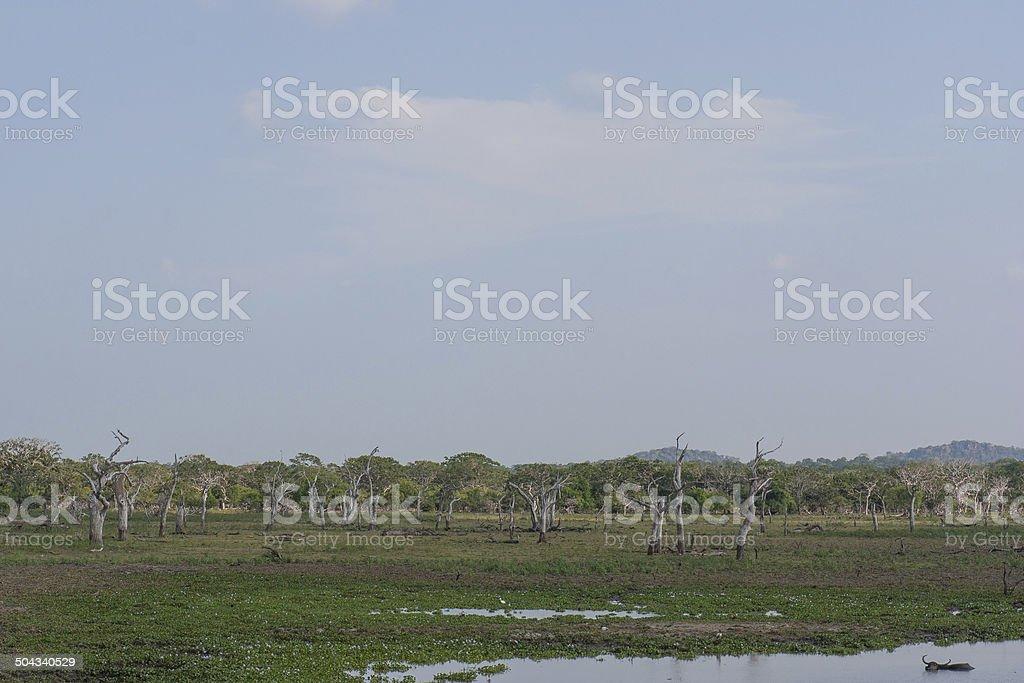Safai in the Yala Nationalpark stock photo