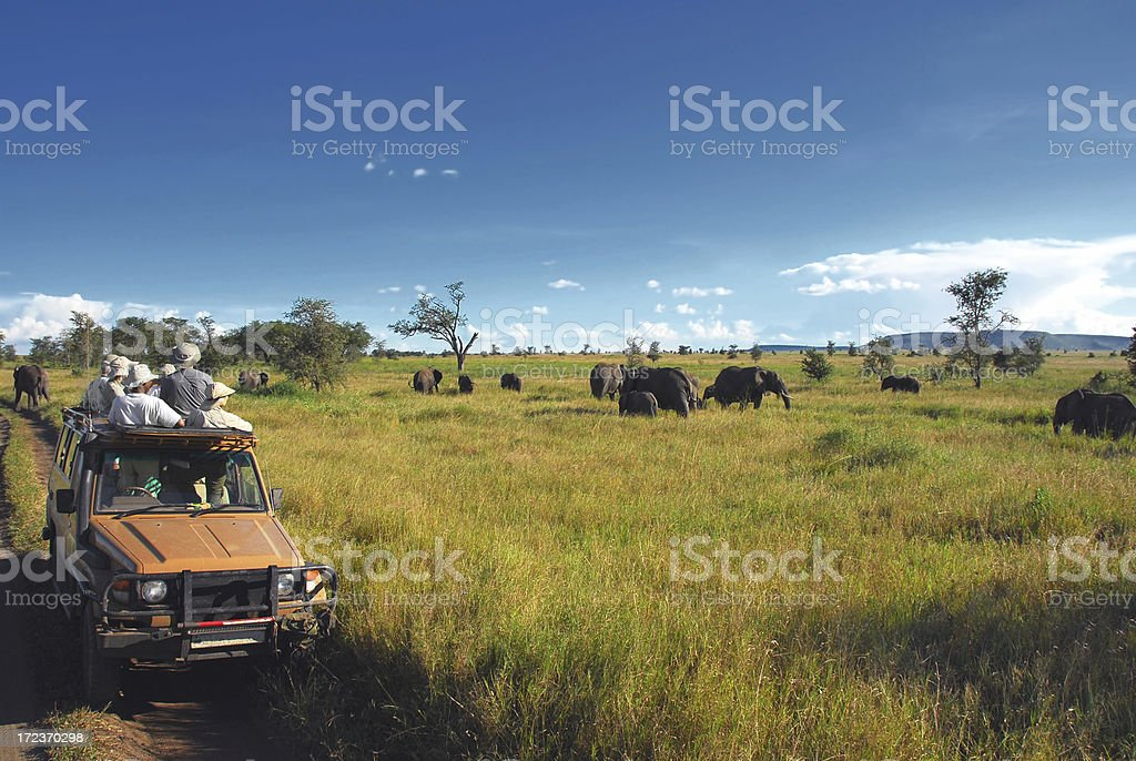 Safari Goers Watching Elephants on the Serengeti Plain, Tanzania stock photo