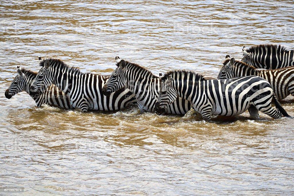 Safari in Kenya stock photo