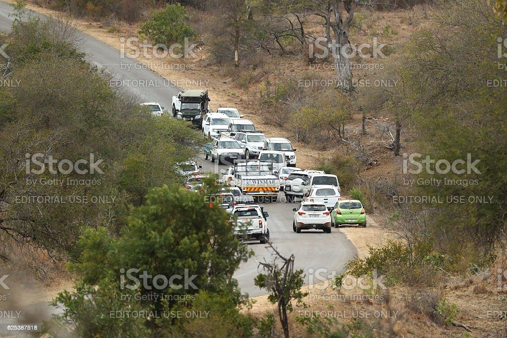 Safari Traffic Jam stock photo