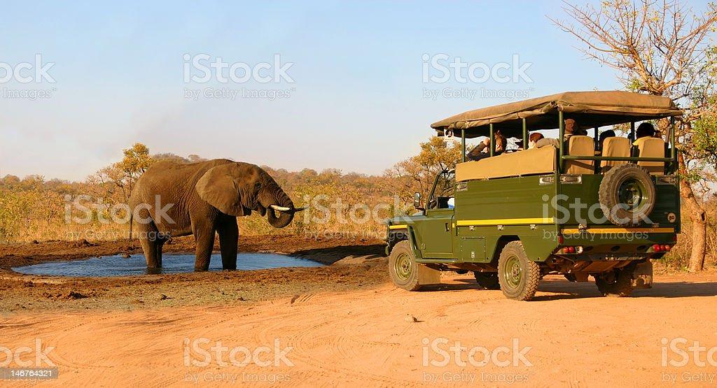 Safari vehicle and elephant stock photo