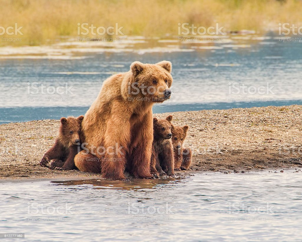 Safe With Mom stock photo