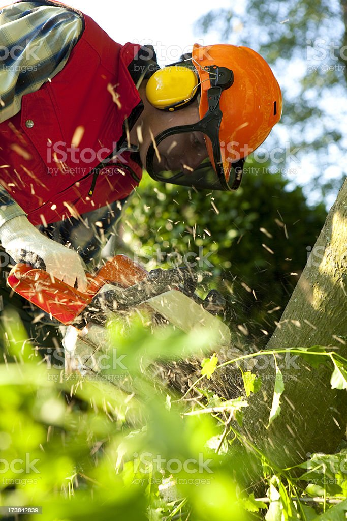 Safety first. Cutting wood with a chainsaw. royalty-free stock photo