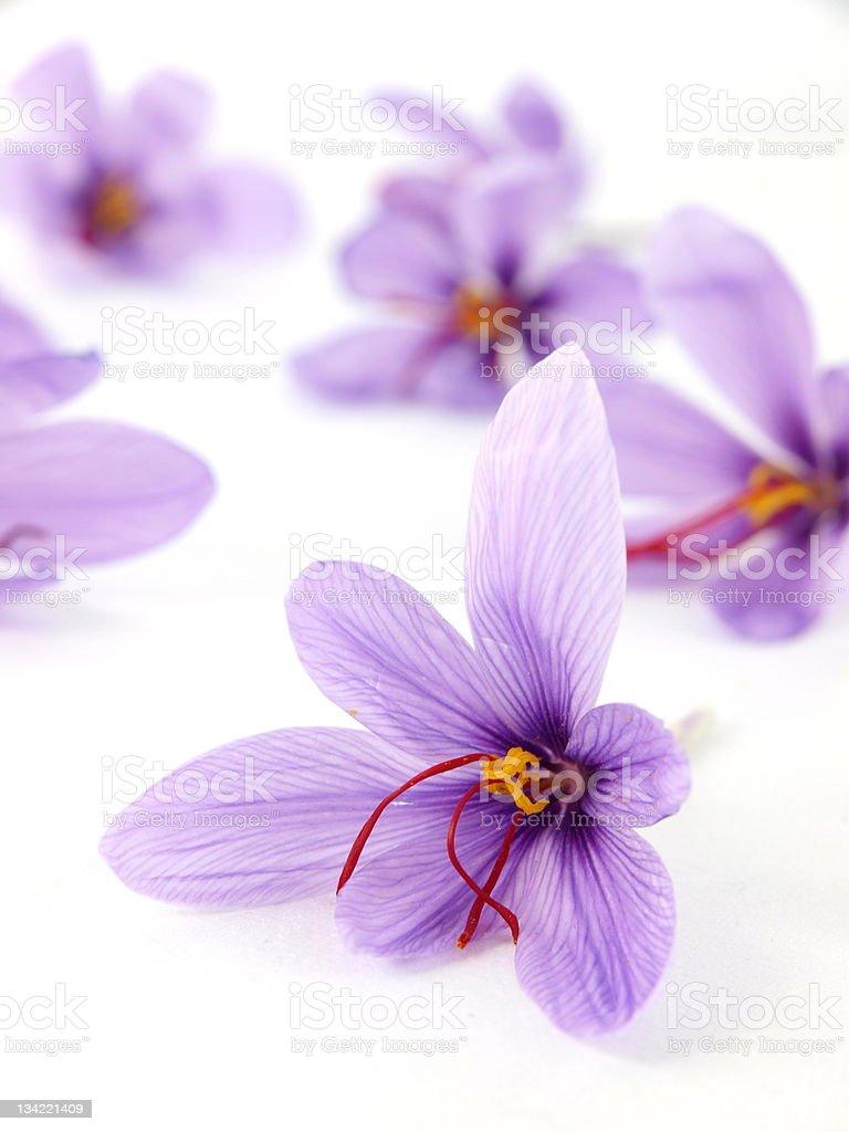 Saffron flowers royalty-free stock photo