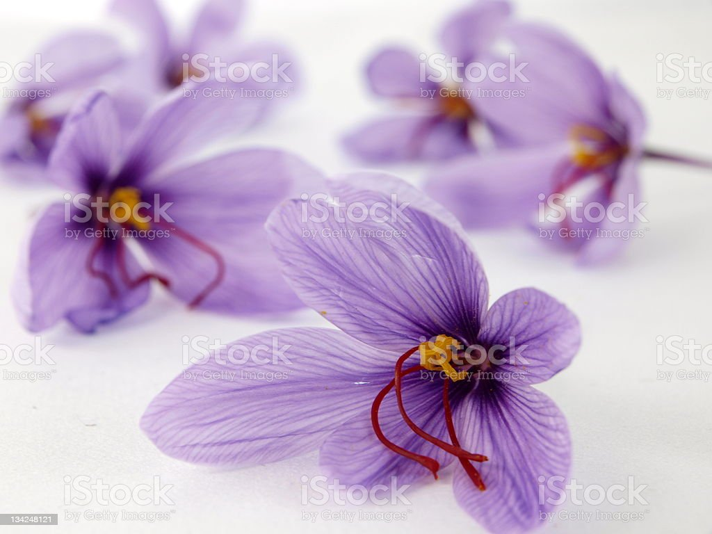 Saffron flowes royalty-free stock photo