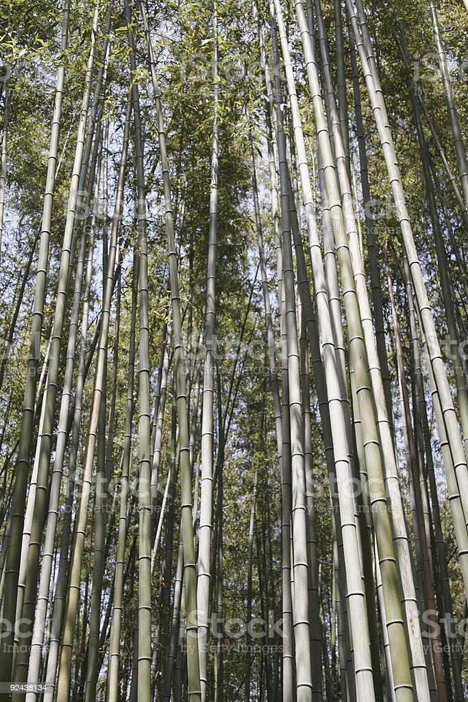 Sagano Forest #2 royalty-free stock photo