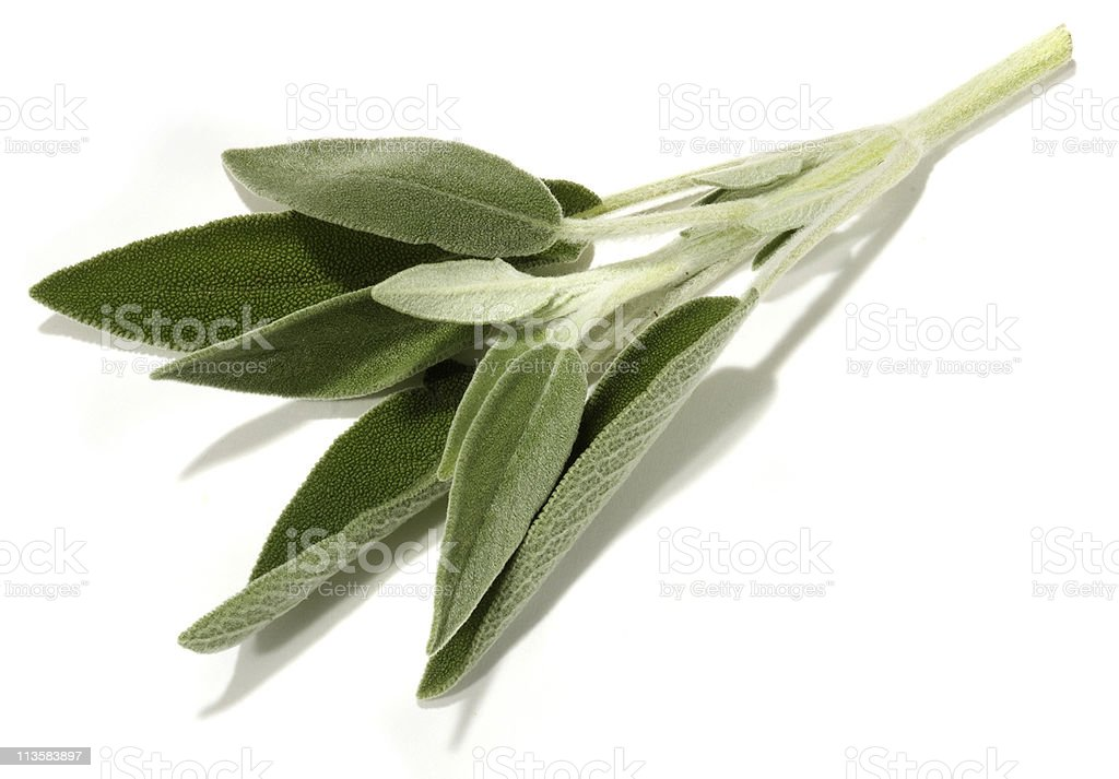 sage cut out on white stock photo