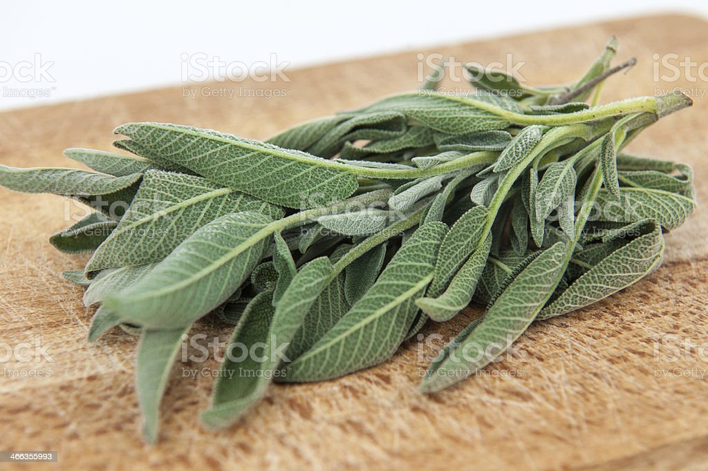 sage grass stock photo