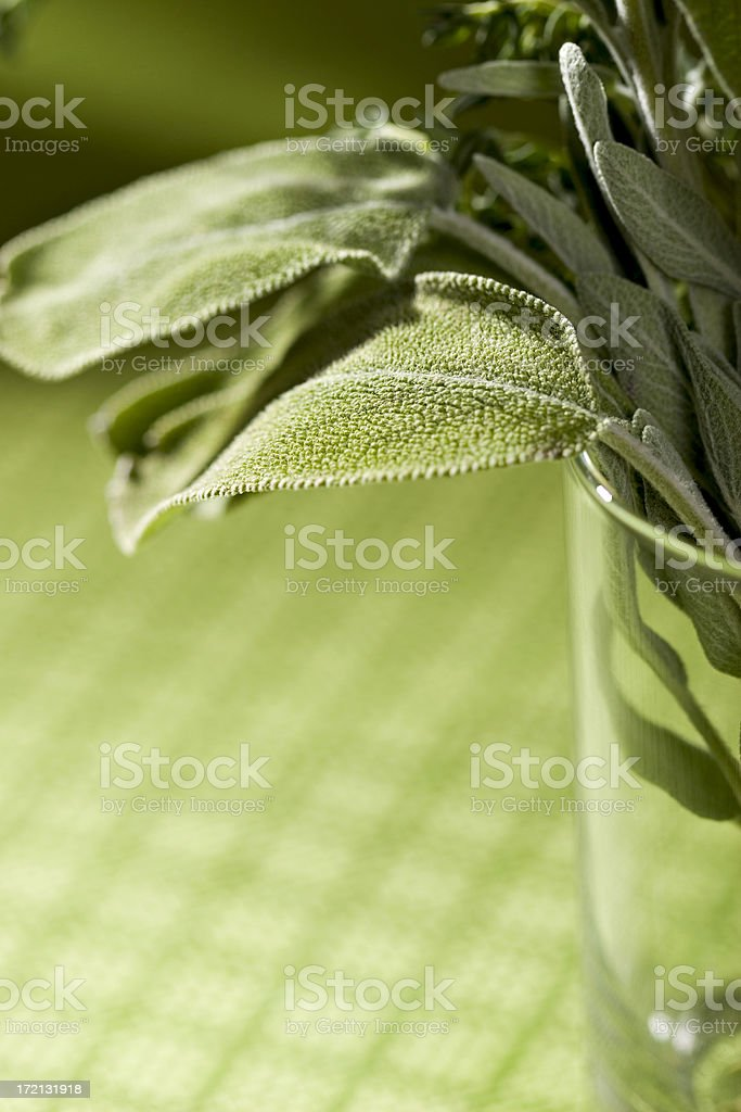Sage leaf royalty-free stock photo