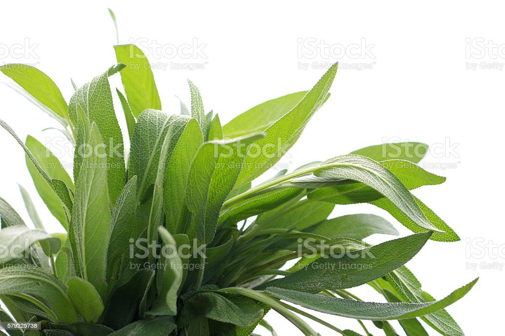 Sage leaves isolated on white stock photo