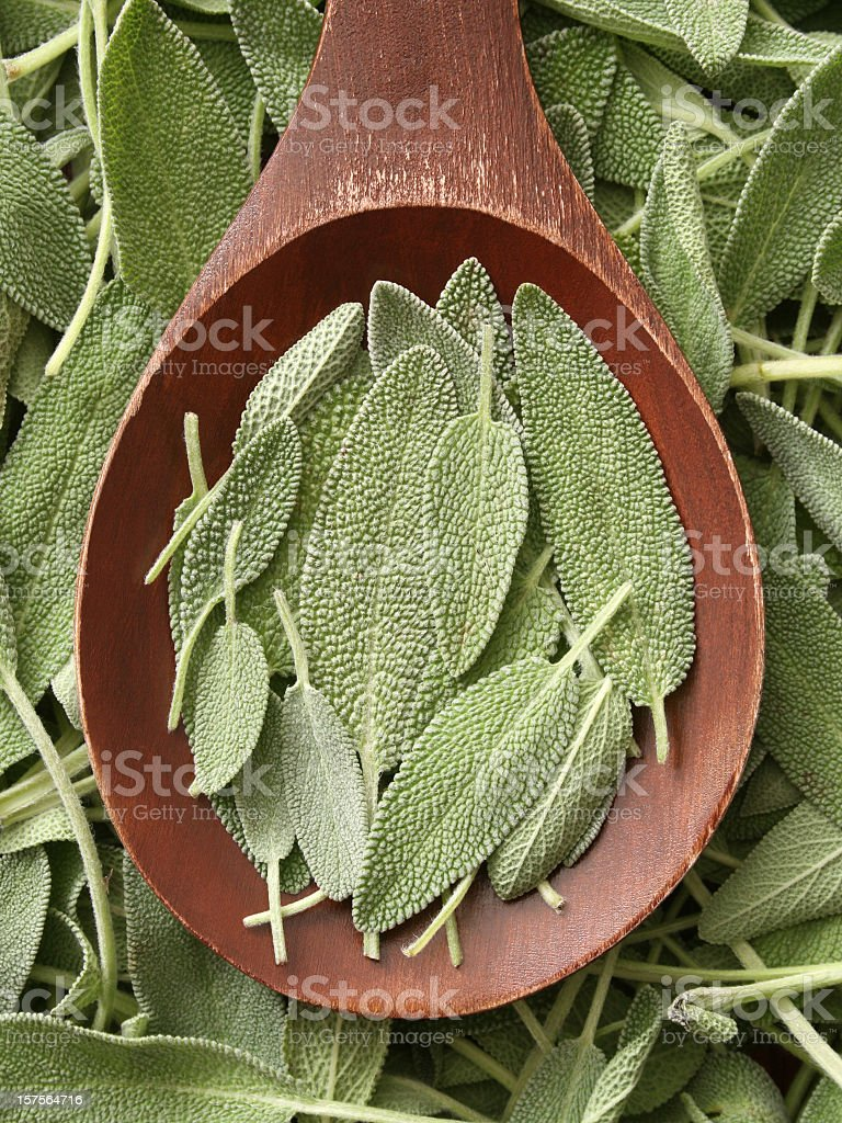 Sage leaves royalty-free stock photo