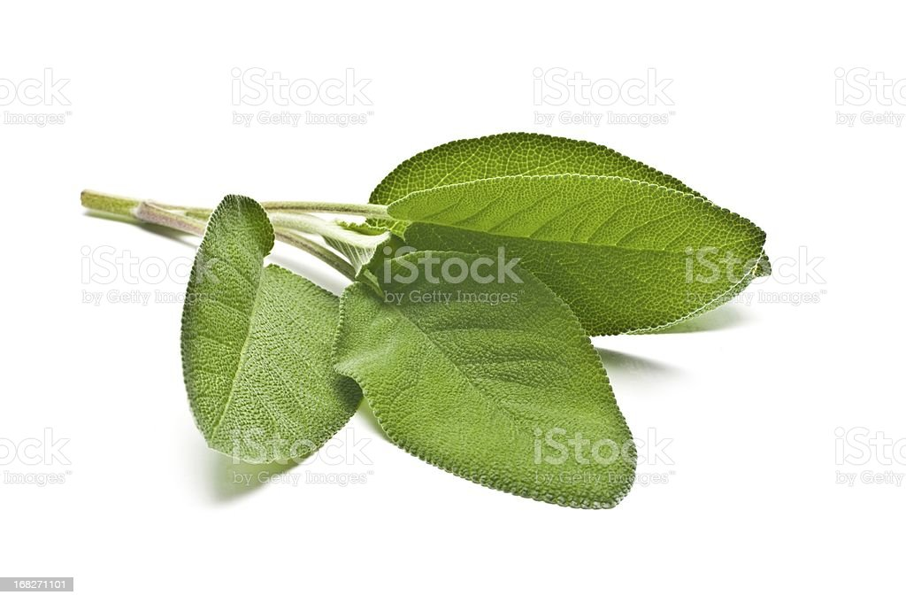 Sage Leaves stock photo