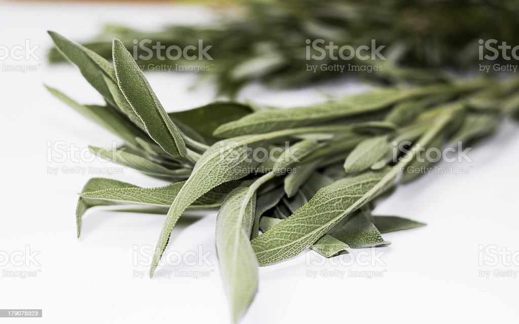 HERBS AND SPICES :: sage royalty-free stock photo