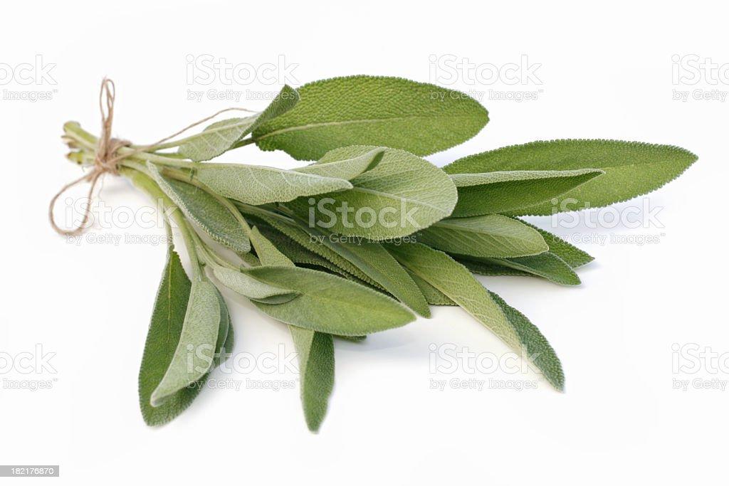 Sage stock photo