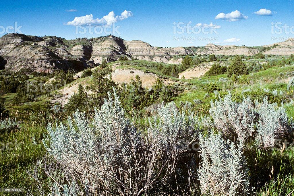 Sagebrush and Badlands stock photo
