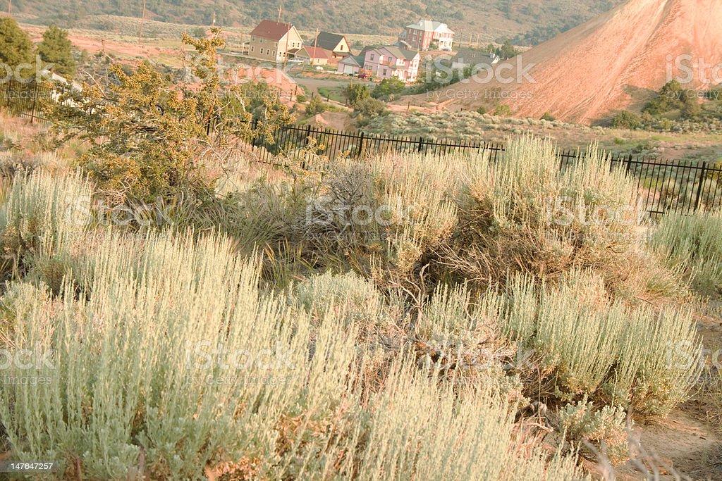 Artemisia tridentata casas foto de stock libre de derechos