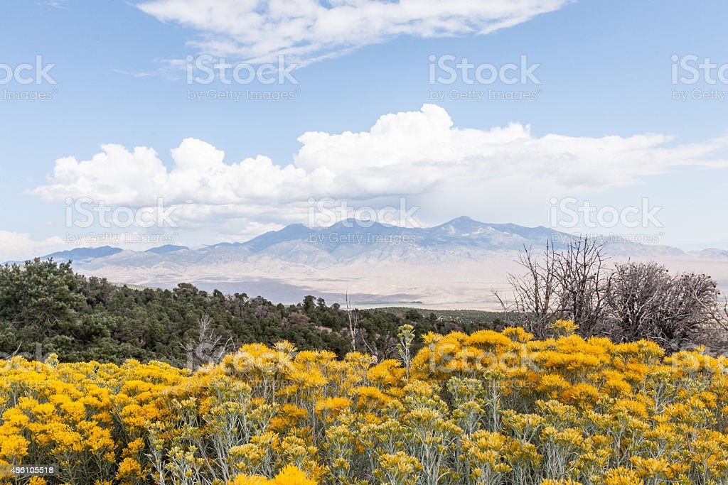 Sagebrush Landscape stock photo