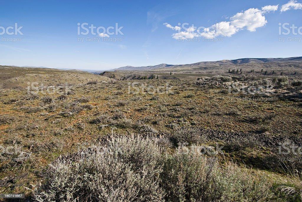 Sagebrush on Umtanum Ridge royalty-free stock photo
