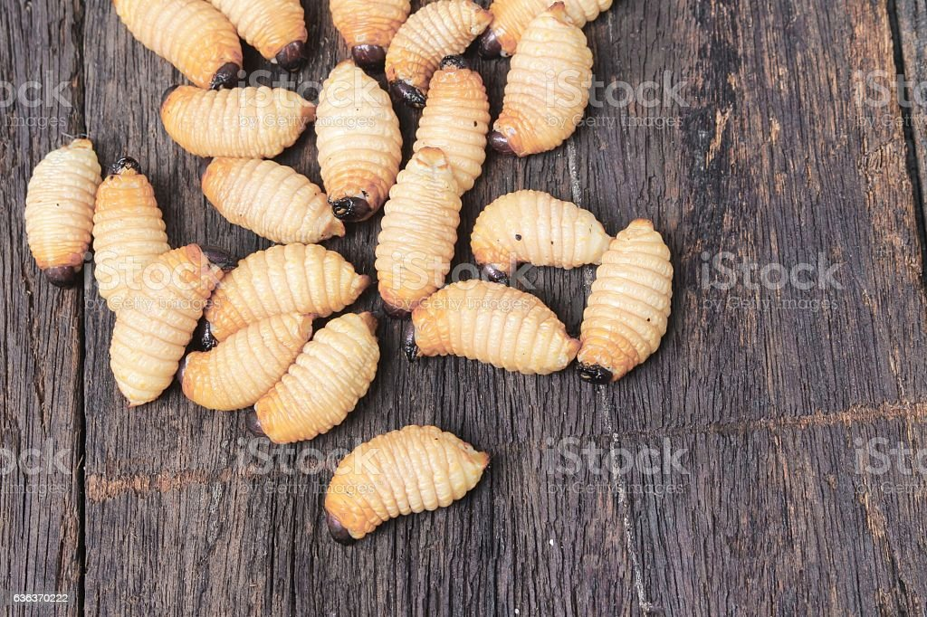 Sago beetle worm, Red palm weevil on the wooden floor stock photo