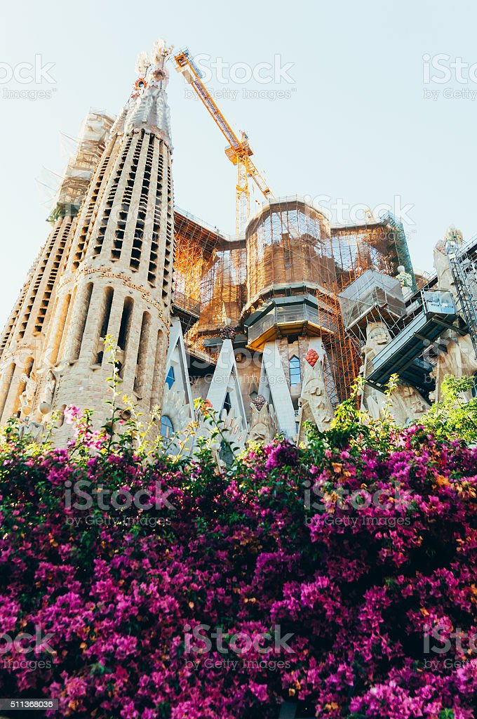 Sagrada Familia behind flower fence stock photo