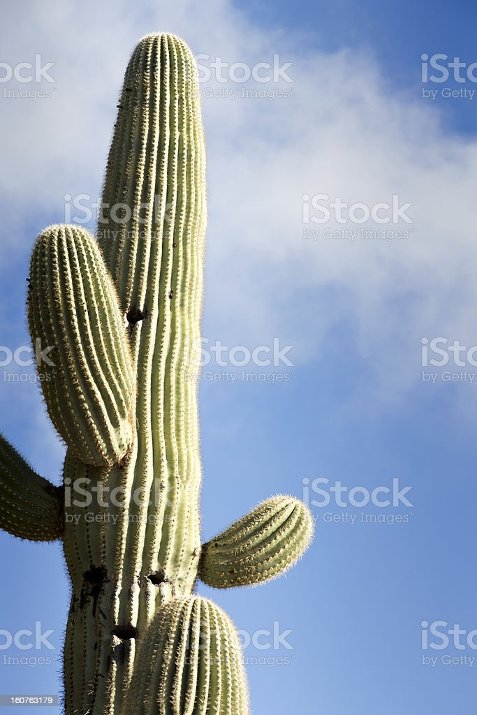 Saguaro Against Sky With Clouds royalty-free stock photo