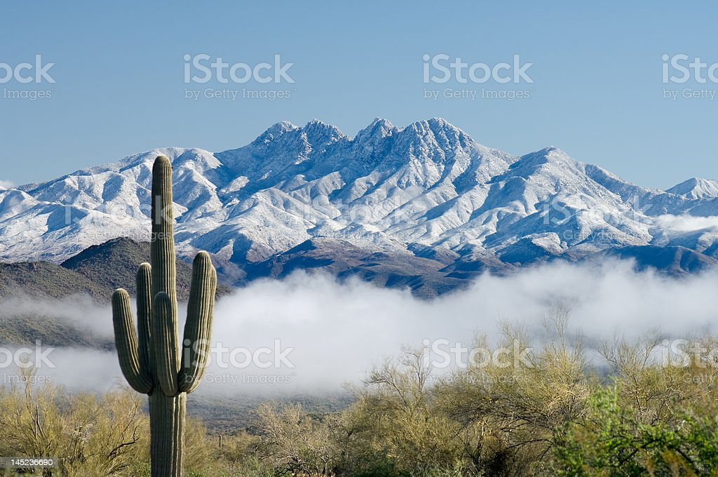 Saguaro and Four Peaks royalty-free stock photo