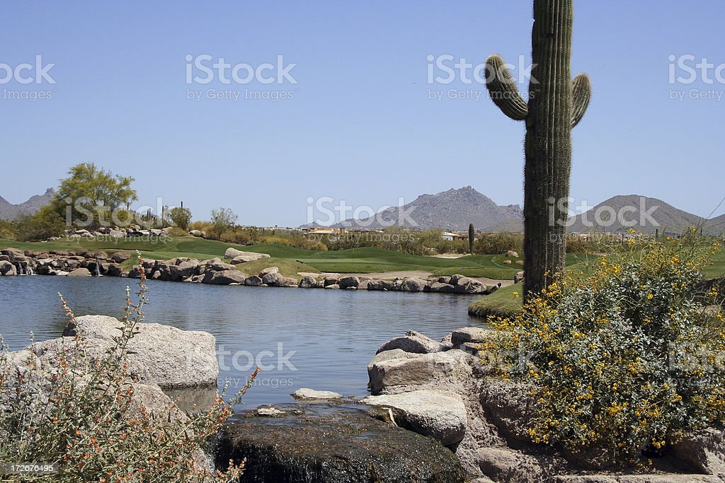 Saguaro cactus at golf course royalty-free stock photo