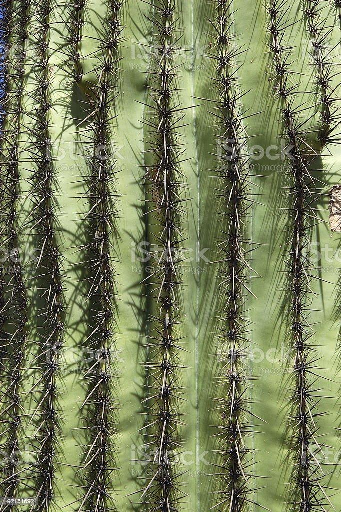 Saguaro Cactus Background Vertical stock photo