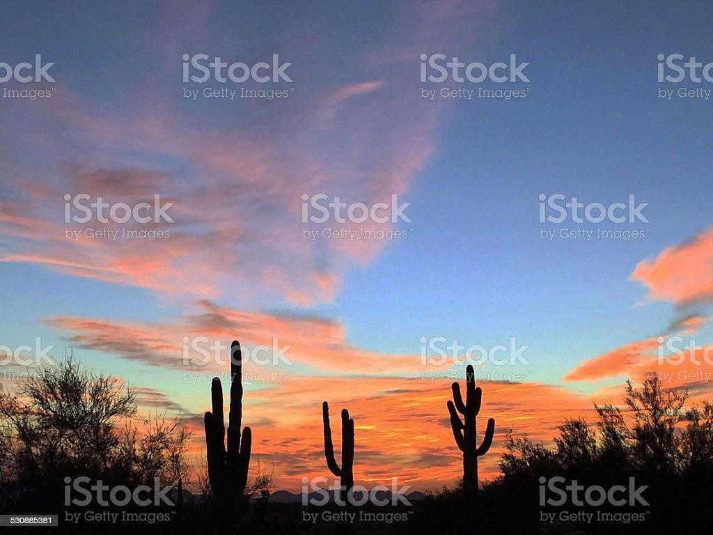 Saguaro Cactus on Arizona Desert stock photo
