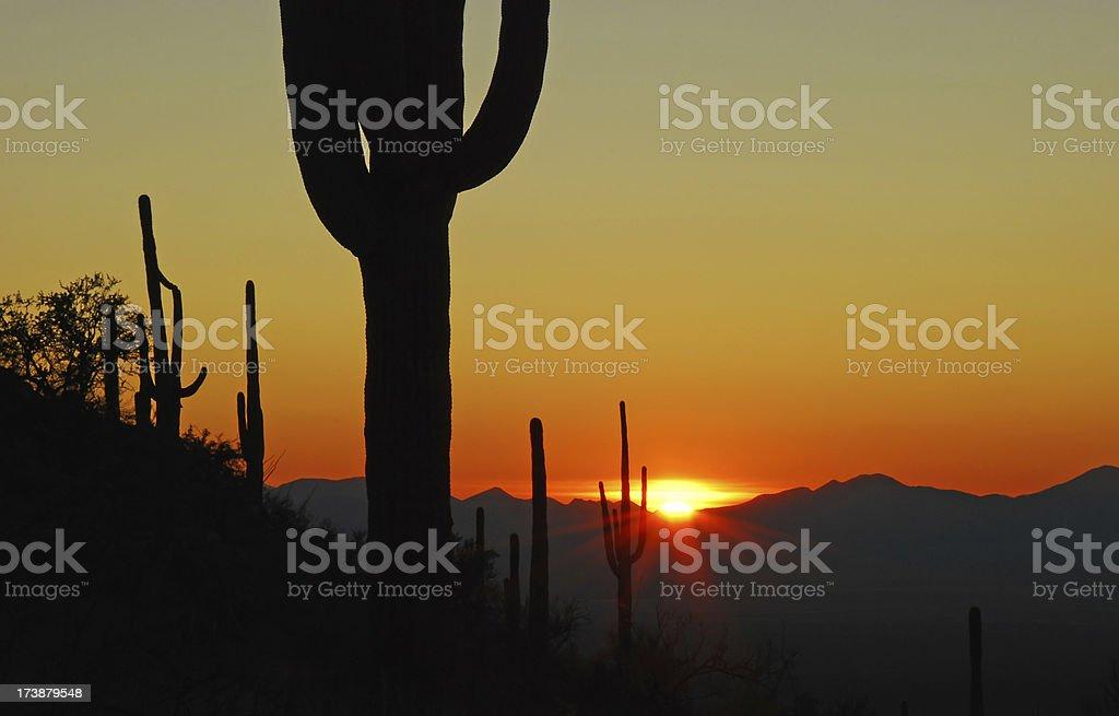 Saguaro Cactus Sunset stock photo