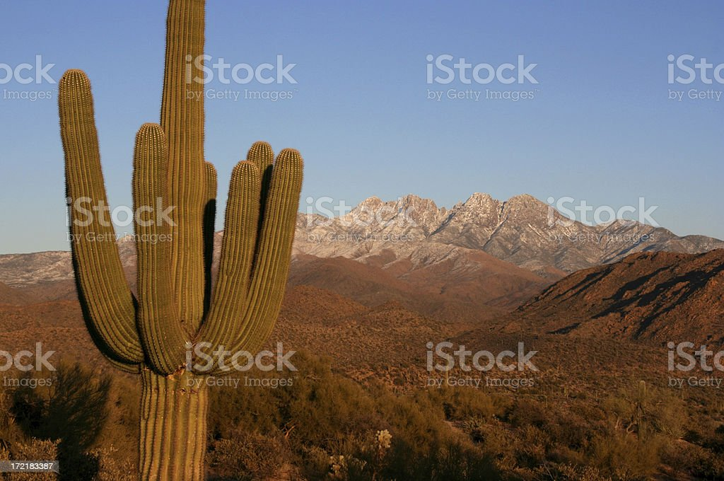 Saguaro Cactus with Four Peaks at Sunset royalty-free stock photo