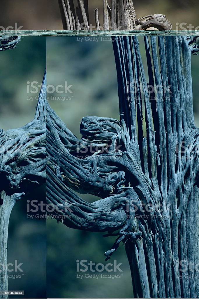 Saguaro morto nel deserto foto stock royalty-free